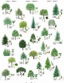 Plakat Nordens træer