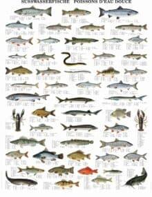 Plakat ferskvandsfisk