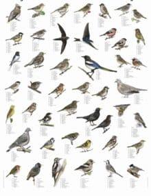 Plakat Havens fugle