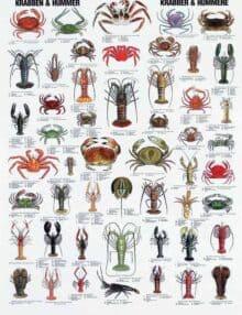 Plakat krabber hummere