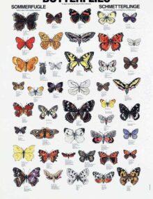 Plakat sommerfugle