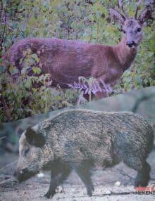 Skydeskiver rådyr og vildsvin