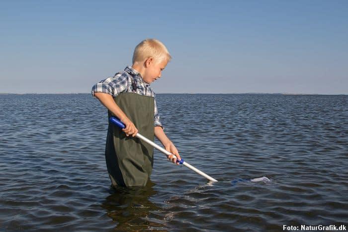 Junior Waders - Naturguide.dk