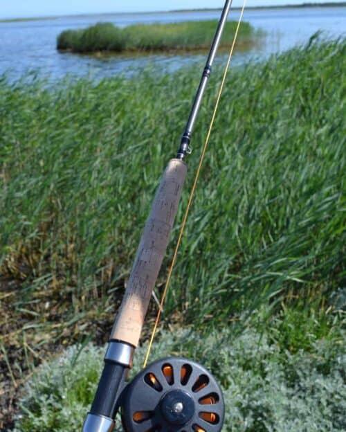 Fluefiskesæt ved fjorden