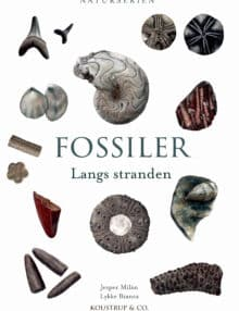 Fossiler langs stranden