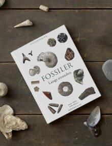 Fossiler langs standen