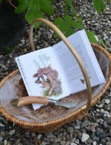 Lille startsæt svampe kurv bog og kniv